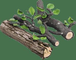 Сира деревина